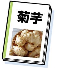 菊芋の教科書イラスト